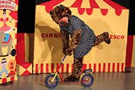 Pohádková neděle: Cirkusácká pohádka