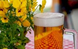 Kyjský pivní festival
