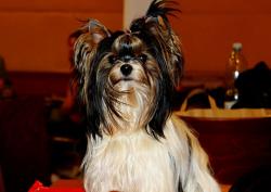 Mezinárodní klubová výstava psů všech ras